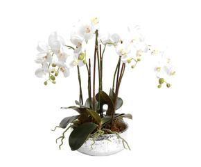 Vasi per orchidee romantiche composizioni dalani e ora for Vasi rossi moderni