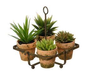 Vasi per piante grasse graziosi contenitori dalani e for Vasi piante grasse