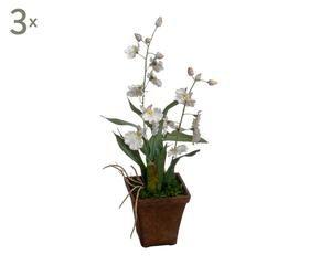 Vasi per orchidee romantiche composizioni dalani e ora for Orchidea finta