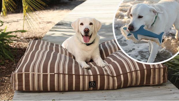 Das perfekte Hundeleben
