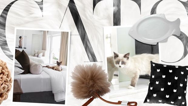 Ästhetik für Luxus-Kätzchen