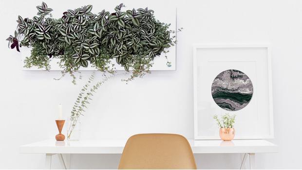 Echte Pflanzen!