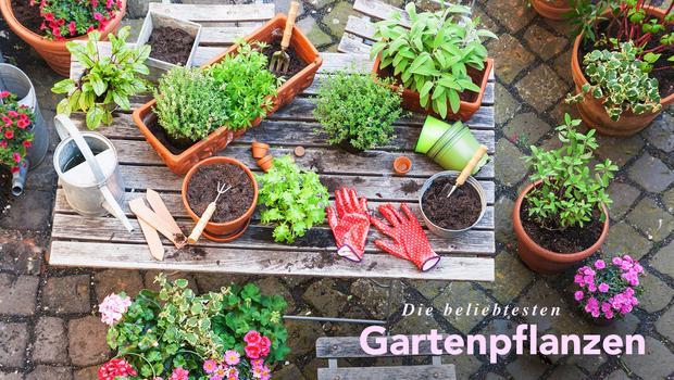 Echte Gartenpflanzen