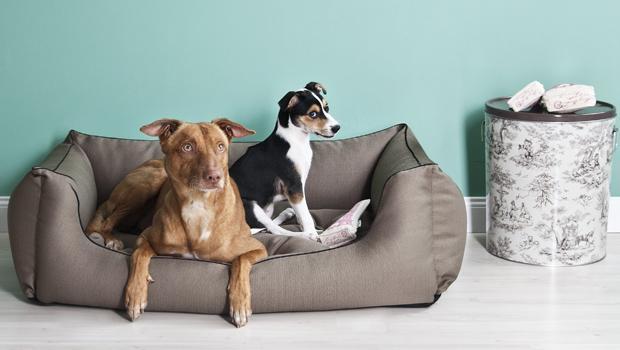 Schöner leben mit Hund