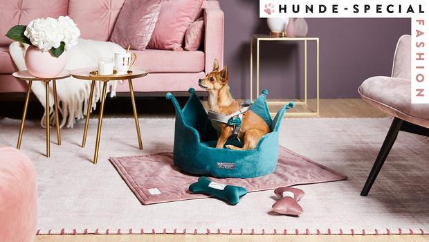 Alles für Fashion-Hunde