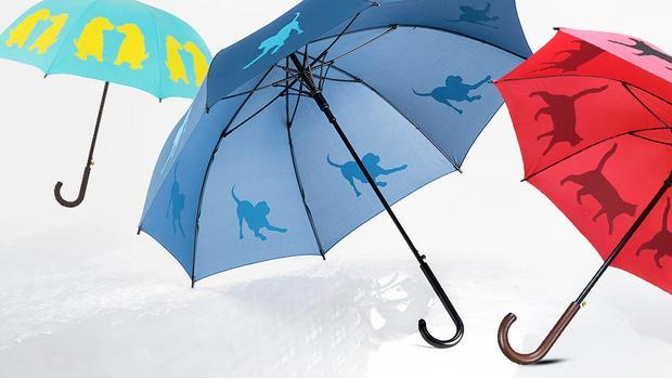 San Francisco Umbrella