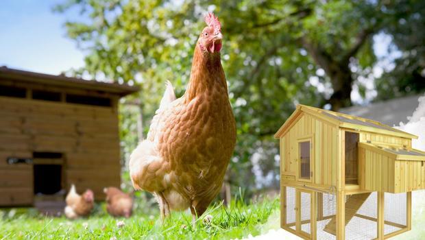 Ein Hühnerstall für den Garten