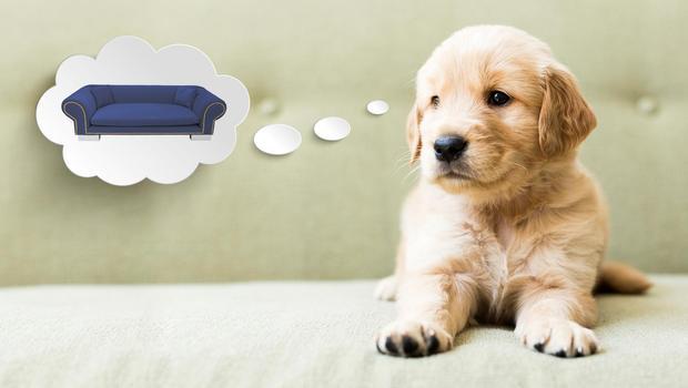 Einzigartige Hundebetten