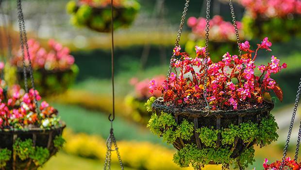 Colgados por las plantas