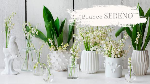 Blanco sereno