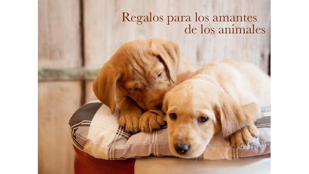 Para amantes de mascotas