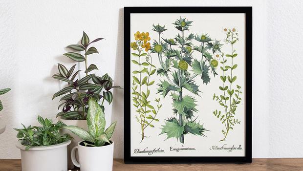 Wall art botanique
