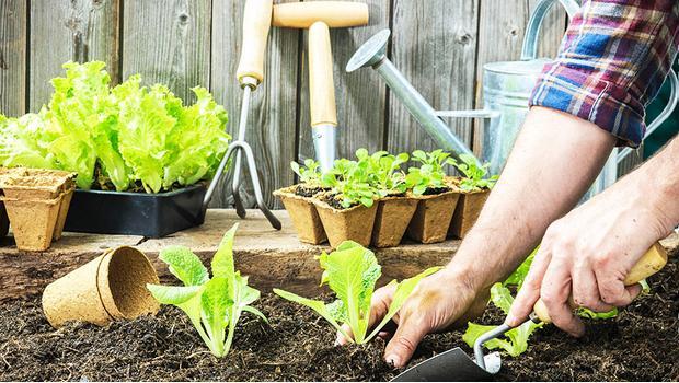 Cultivez votre jardin