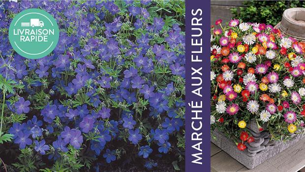 Fleurs et pots