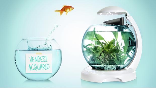 Un pesce per amico