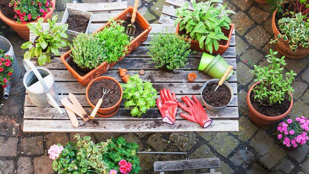 Echte tuinplanten