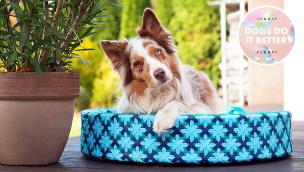 150+ musthaves voor honden