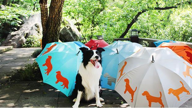 San Fransisco Umbrella