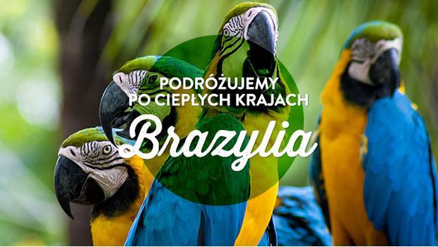 Brazylijska dżungla