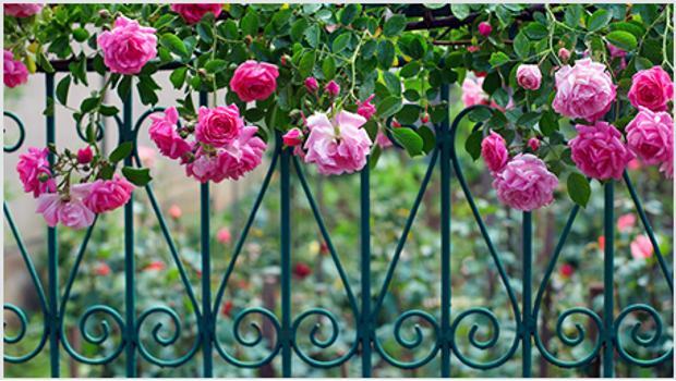 Ogród w angielskim stylu