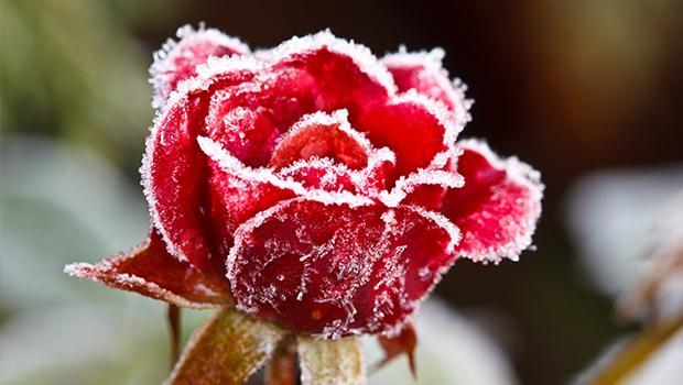 Twój zimowy ogród