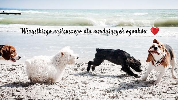 We ♥ dogs!
