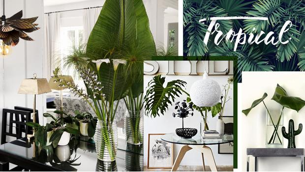 Trend: Tropical