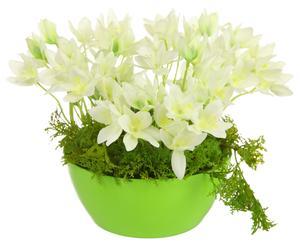 Первоцветы в кашпо